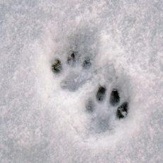 Četri kaķīši un viņu dzirnavas