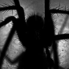 Mūsu, zirnekļu, dzīve