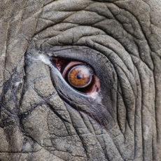 Par ko domā zilonis